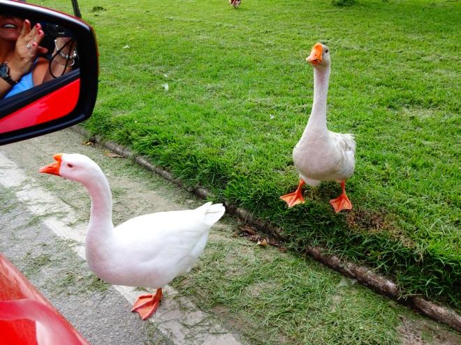 CrAzY ducks!