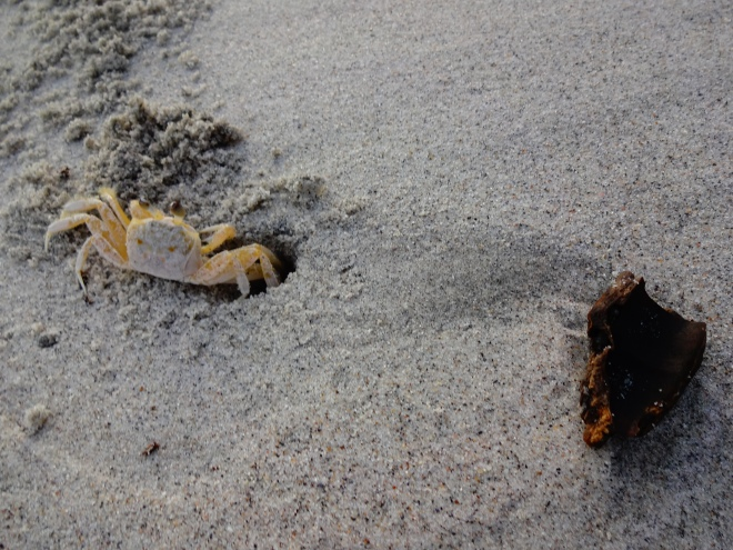 Lots of little hermit crabs on the beaches