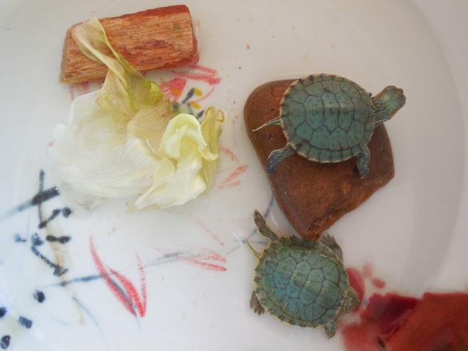 swan diving turtle :)