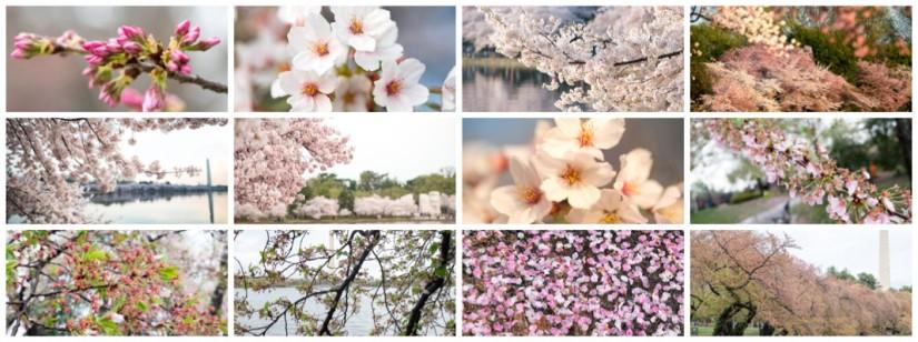 Spring time inDC